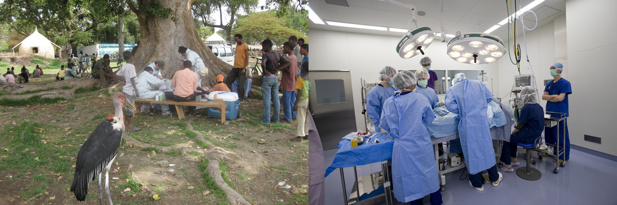 Graduate School Of Veterinary Medicinegraduate School Of